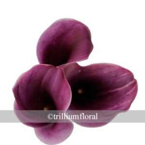 Purplepurple