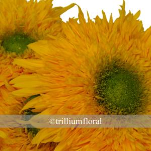 Sunflower-TeddyBear