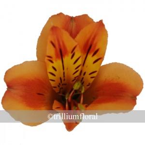 orangequeen