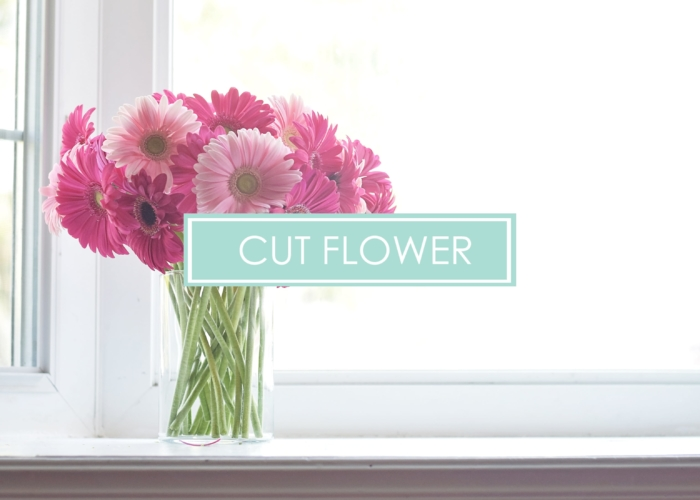 CUTFLOWER - Copy-min