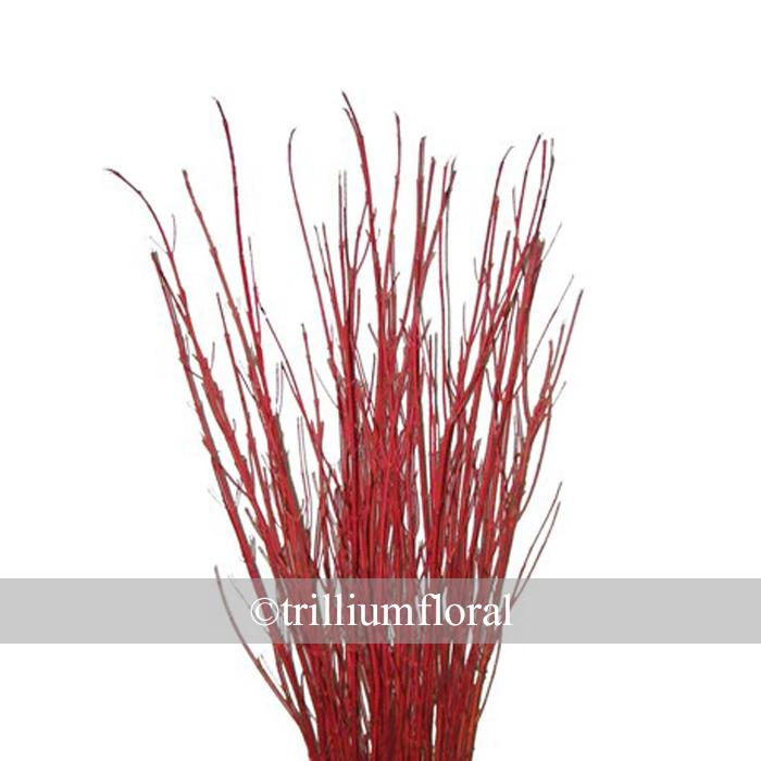 Dogwood - Red